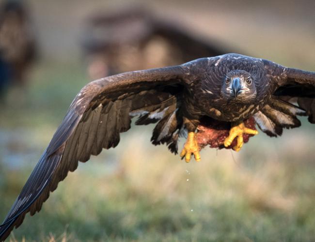 Schneller Service wie ein Adler - als Element der Verkaufspsychologie